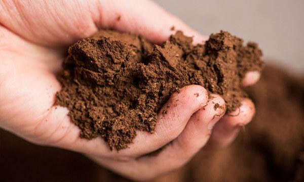 Pastagem Rotativa amostragem do solo para fertilização