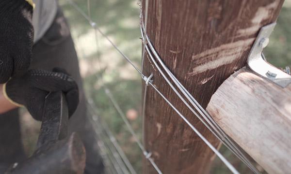 Instalação da Tela Campeira em Cerca para Ovinos